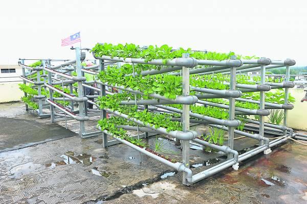 不需要空旷的土地,只需一个小小的空地,也可以种出各种绿油油的蔬菜。