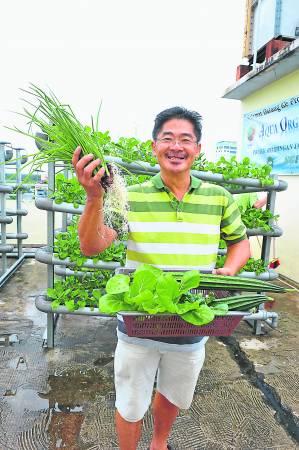 加洲酒店业者周昌狮将顶楼改造为空中菜园,想吃新鲜蔬菜时,上楼采摘即可,省钱环保又健康。