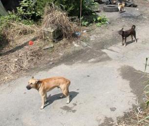 嫌犯家养的狗异常凶悍,让人惧怕。