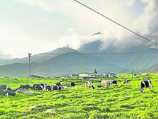 在东马神山脚下的达昆达山就有一个乳牛牧场,那里犹如纽西兰般的青青草地,以及一窥神山巍峨全貌的幸运。