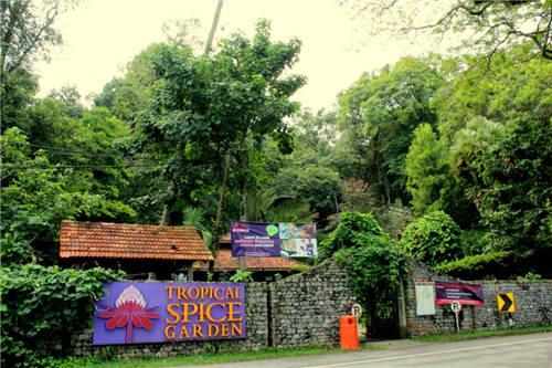 热带香料园所栽种的树木和叶子以教育为首,非以收割为主。