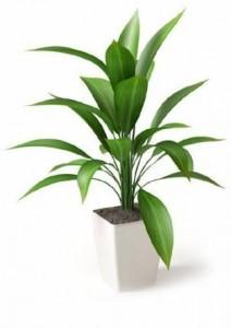苗大表示,在办公室摆放一盆栽增添绿意令整个办公室充满灵气!