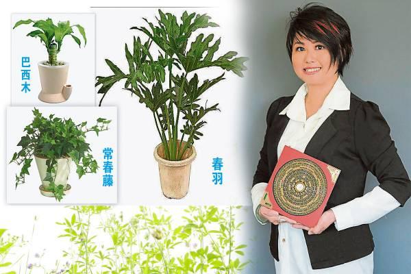 Jenny老师忠告:在居家的财位上放置活植物,再配合开门纳气法就能催旺财运。