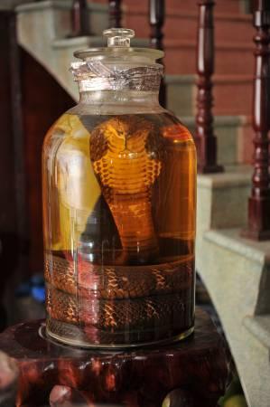 这条眼镜蛇王在高度的纯米酒中浸泡已超过20年,乃是国方寨蛇肉餐馆的镇馆之宝,多多钱也不卖。