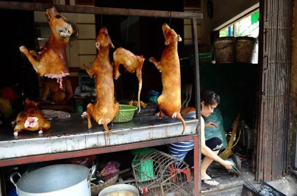 经过烧烤的狗,就好像我们的烧猪般被吊起来卖。