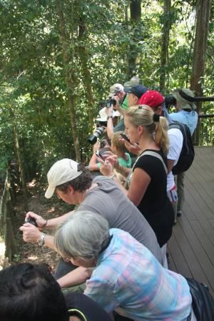 这群来自英国的游客被眼前的马来熊所吸引,近距离观看及拍摄马来熊。