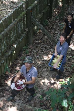 员工及志工们都会定时喂马来熊,将食物从栅栏抛进去。
