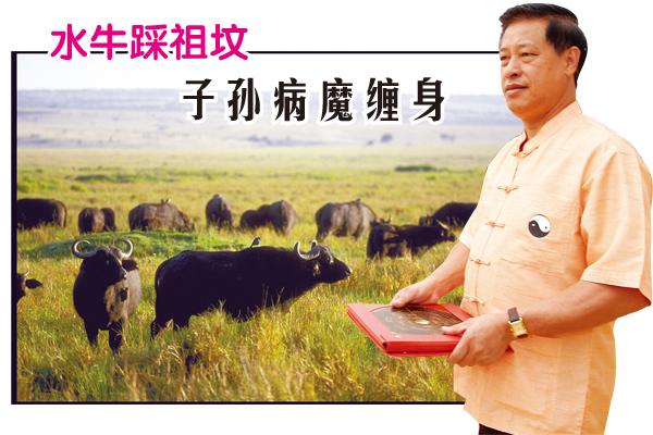 张先生祖坟的义山附近有很多水牛出没,畜生无性,屡次破坏当地的坟墓,影响张先生与家人的运势。