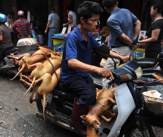 越南政府规定店家们只能在郊区宰狗,杀了后再运回店里烹煮。