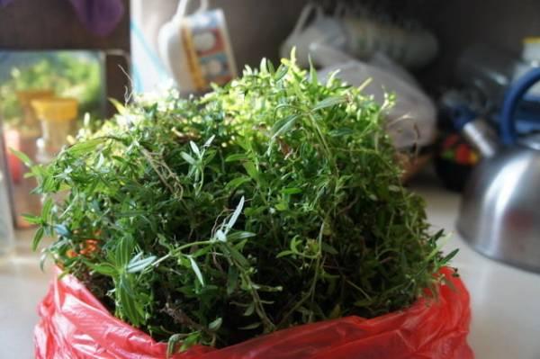 经常被误以为是杂草的白花蛇舌草,其实是清热解毒之宝,每星期煲煮一次,可防止发热气。