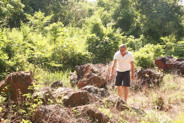 """沥赖生长在深山,除了周围得具备培养它的条件,同时还得有适量的""""食物""""供应才行。"""