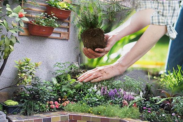 种植物虽能催旺桃花,但一定要懂得种对植物,万一种错植物,分分钟孤独终老。
