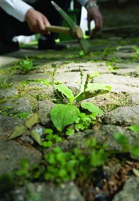 符瑜玲说医馆的药草有一部分则是靠种植和野外采撷所得。