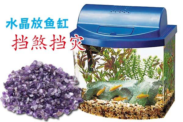 用碎水晶石养一缸风水鱼,有助挡煞的功效。