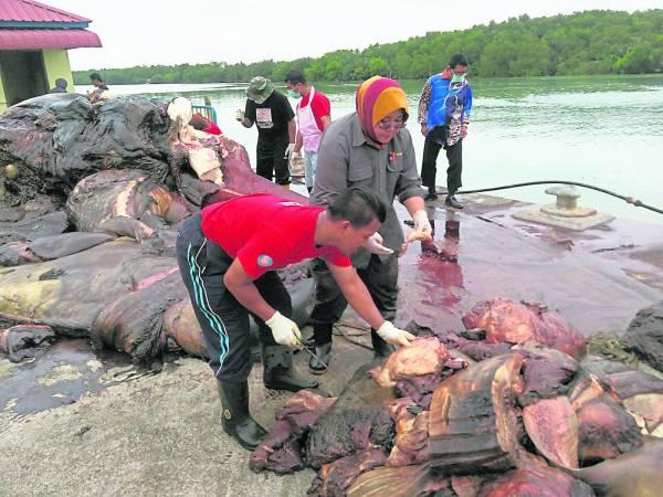 塞鲸被肢解后,一块块肉叠在一堆,让人恶 心。