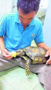 他最喜欢将小龟放在大腿上喂食。