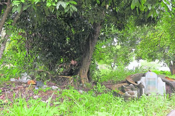 如果祖坟靠近大树,易犯根煞。