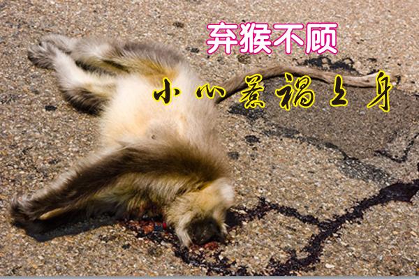 """廖君撞到一只怀孕的母猴却弃之不顾,虽然事后内疚不已,但已铸成大错,姜太公叫他亲制""""出入平安""""牌,随身佩戴才躲过一劫。"""