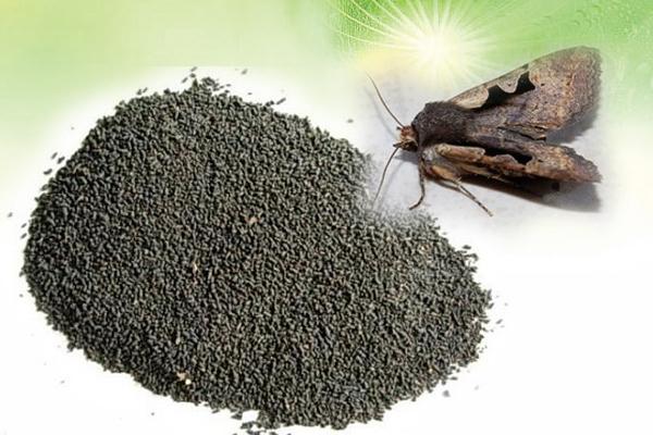 虽然是香夜蛾、米黑虫等昆虫的排泄物,但凡品尝过的人都觉得虫茶味浓略显甜,口味醇厚。