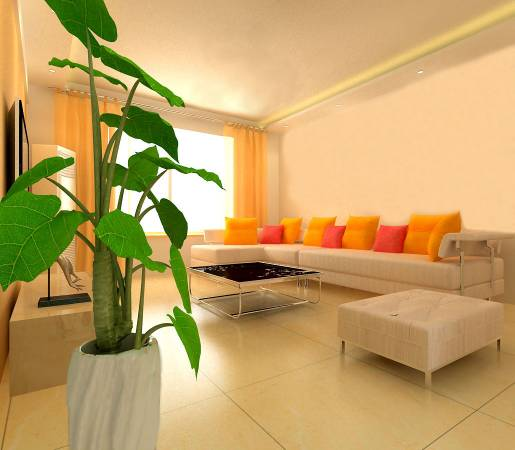 穷人没钱也可催旺财运,只要在家风水位摆一棵盆栽就能让命运改变!