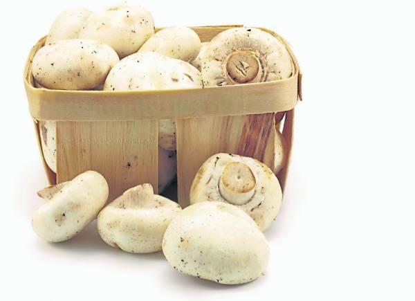 菇肉厚脆嫩与香味浓郁,更富含人体必需氨基酸、矿物质、维生素和多醣。