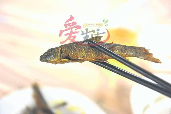 烹调油鱼时,不须添加菜油即能煎出美味可口的油鱼,只可惜产量越来越少了。