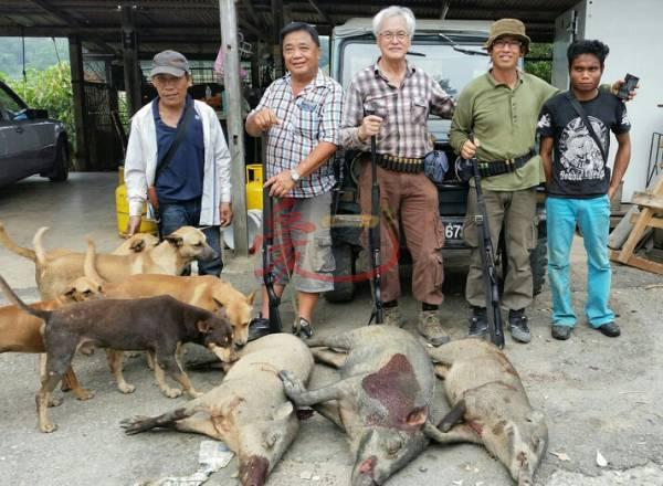 山猪打猎团队的队员们拥有多年的打猎经验,个个神乎其技,最高纪录一天猎到17条山猪呢!