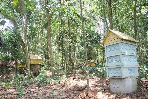 蜂箱遍布在树林周围。