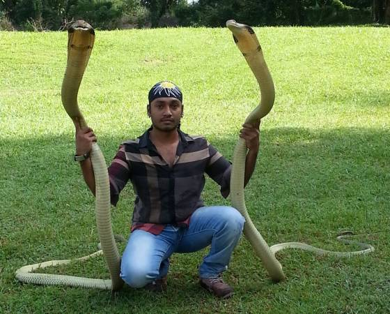 因父亲是蛇王缘故,自幼便与蛇为伍的Amjad顺理成章继承父业,也是个著名的蛇艺表演者。