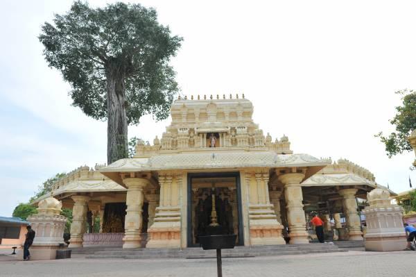 幸免刀斧的古树被保存在寺庙的内部,这株古树周边安祥宁静, 成了善信与神许愿的桥梁。