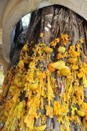 如果想要求孩子的,可以买个小篮子用黄布绑在神树上许愿,愿望就会成真。