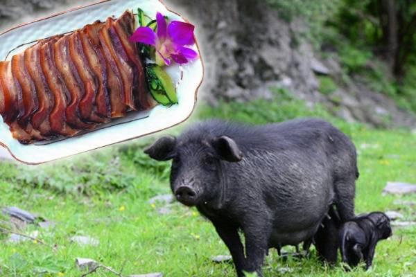 """西藏的""""藏香猪""""被称为""""高原之珍"""",脂肪含量低、皮薄肉鲜不油腻,烹煮后,每一口都会让你品尝到何谓""""美味""""啊!"""