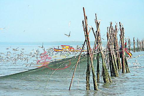 还保留着原始面貌的瓜拉牛拉,每年的8月至翌年3月都会出现大批候鸟。