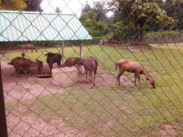 泡完温泉,不妨带孩子到野生动物保育中心观赏大马野生动物的美。