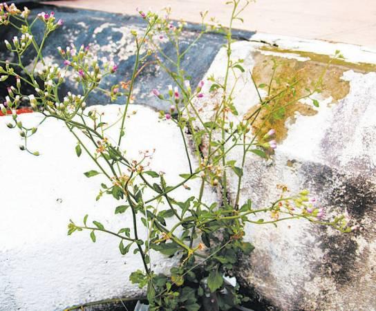 过山虎——功效:拥有清热解毒和排毒功效。