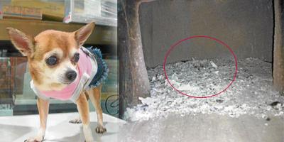 狗脸影像画面,让Trace啧啧称奇,认为是超度的Princess显灵来表达感恩。
