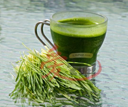 张碧兰每天都喝一杯小麦草汁,因为能清除身体内残留的药物和毒素。