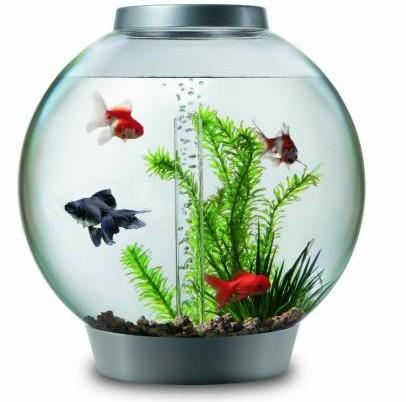 在家中风水吉位放鱼缸,也有催财功效。