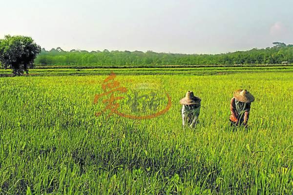 看着农夫辛苦的耕种,深深体会农夫的辛苦,回到家后小孩一定会乖乖把米饭吃完!