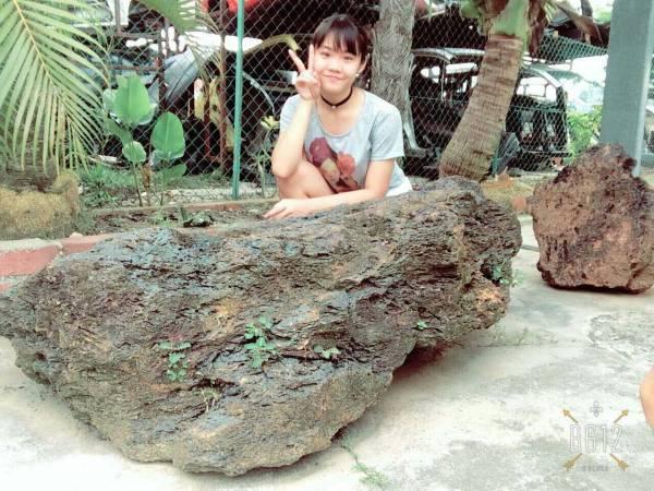 """朱聪收藏了几个重达三吨的巨无霸沥赖,由于沥赖不喜欢主人高调,但是为了让本报报导,朱聪特别找了一个""""模特儿""""与沥赖做比例。"""
