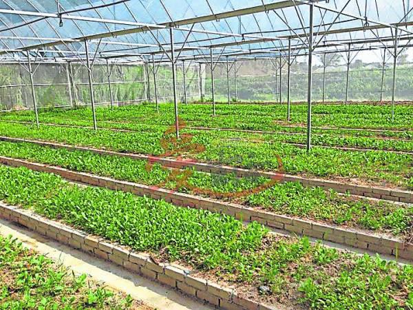 在这里学习如何种植蔬菜,体验一番农家乐。