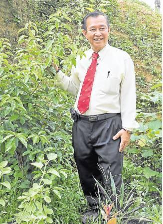 罗医师不但自己培植千金莲,还将千金莲花的枝叶磨粉,经过配置加工制成胶囊。