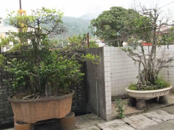 干枯盆栽:栽种超过十年的盆栽逾200盆,如今因为聚阴过剩,导致事主频频办事不利。