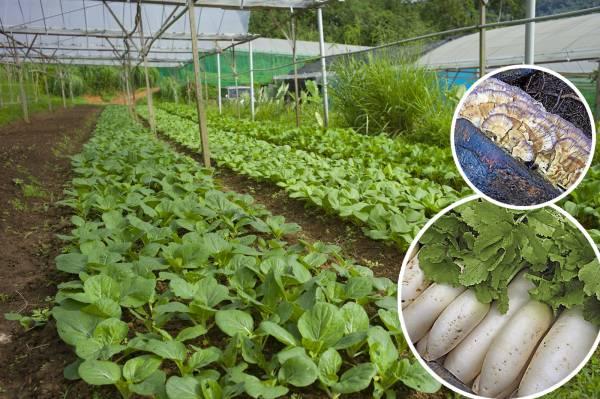 在这菜园里,蔬菜都特别肥美,令人看了也特别想买!