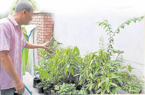 张医师的庭院里栽培各种植物,包括蔬果、草药,方便他提炼疗药油。