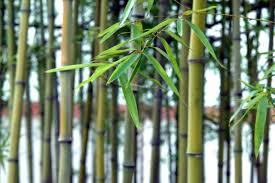 用竹竿、竹叶扫蜘蛛网,也叫竹报平安,可以真正的送旧迎新。