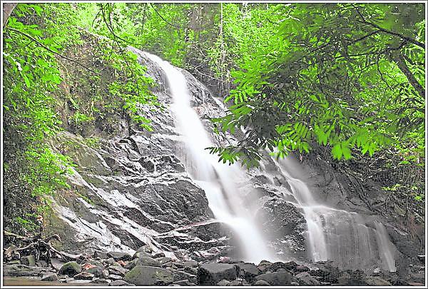 只要在瀑布下方站着,就能享受天然按摩浴了。 康情瀑布(The Kanching Waterfall) Kanching Waterfall, Templer Park, 48000 Rawang, Selangor 开放时间:7am - 5.30pm GPS导航:3.299441, 101.619500