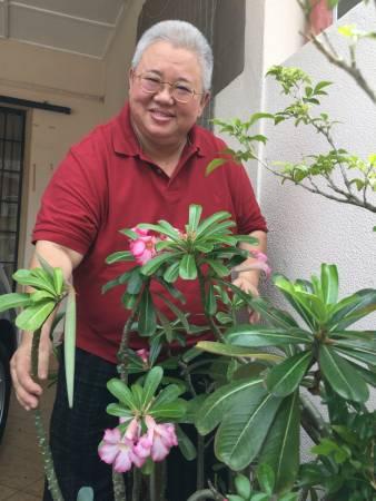 要种一棵能催旺自己运势的富贵花,何师父建议可以依据一家之主的生肖及行业,并再选择适宜的方位种植,能催旺个人运势,阻挡煞气!