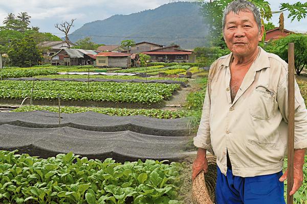 年过半百的江坤河,几乎全年无休的在菜园里忙活。