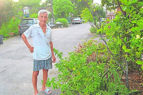 曾患癌的陈吟利服食草药自愈后,积极推广草药治疗法,而且还在住家栽种,甚至帮助过不少人。